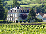 Rent-a-vine in Burgundy and participate in wine experience days