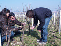 Get the behind the scenes vineyard tour in France and get involved in your own wine making experience